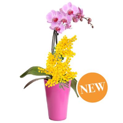 Orchidea Raffinata