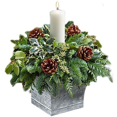 Ordina 02 Candido Natale online e invia a domicilio