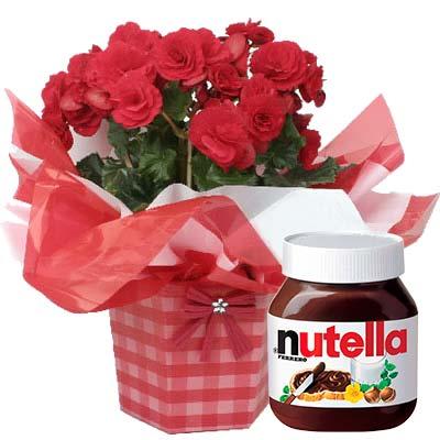 Ordina 05 Begonia con Nutella online e invia a domicilio