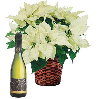 Italia in invia online candore bianco con spumante for Comprare bonsai online
