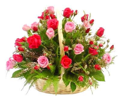Ordina 28 Cesto Di Rose Rosse e Rosa online e invia a domicilio