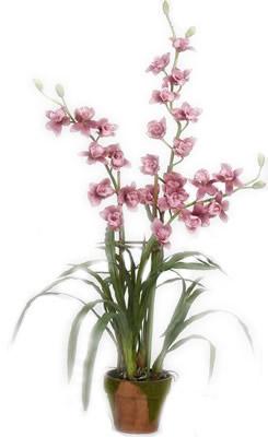 Ordina 02 Pianta Orchidea Cimbidium online e invia a domicilio