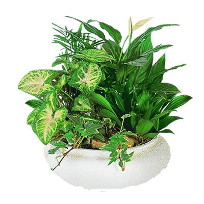 comp.piante_maxi.png
