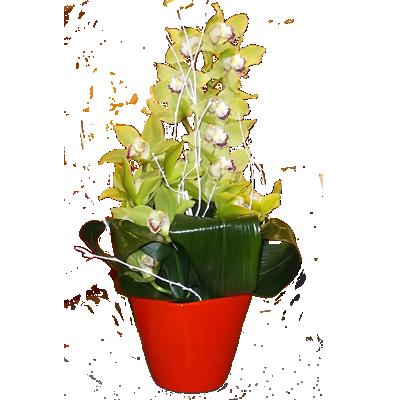 comp_orchidea_verde.png