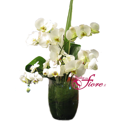 Italia in fiore comprare e inviare orchidee online for Comprare pesci online