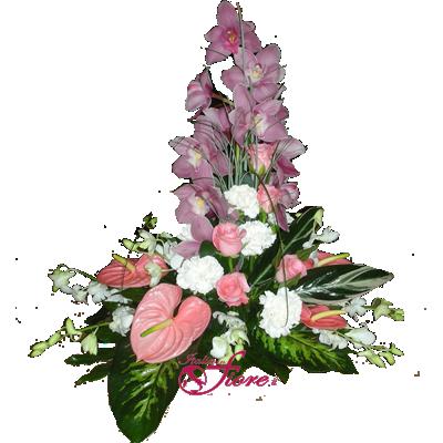 composiz_orchidearosa.png