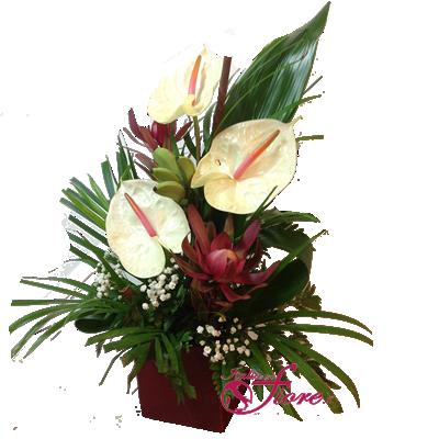 Italia in fiore comprare e inviare fiori online for Anthurium rosso