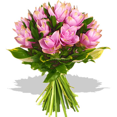 Ordina 05 Bouquet Curcuma online e invia a domicilio