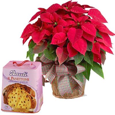 Ordina 00 Dolce Stella di Natale con Panettone online e invia a domicilio