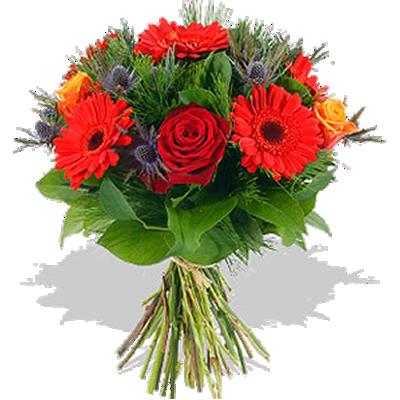 fioris.v.png