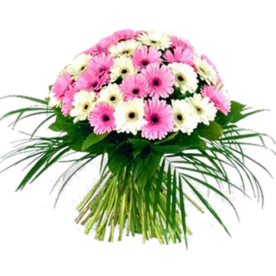 Ordina 05 Bouquet di Gerbere Bianche e Rosa online e invia a domicilio