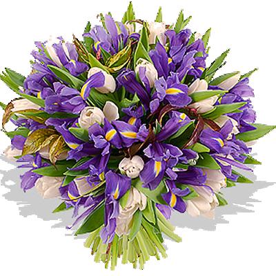 iriss.png