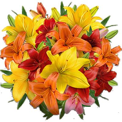 Lilium Colorati