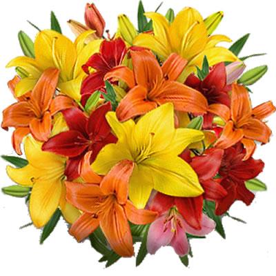 Ordina 03 Coloratissimi Lilium online e invia a domicilio