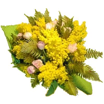 Mimosa con Tulipani Rosa