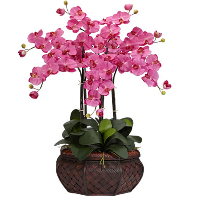 Ordina 01  Bellissima Orchidea A 5 Rami online e invia a domicilio