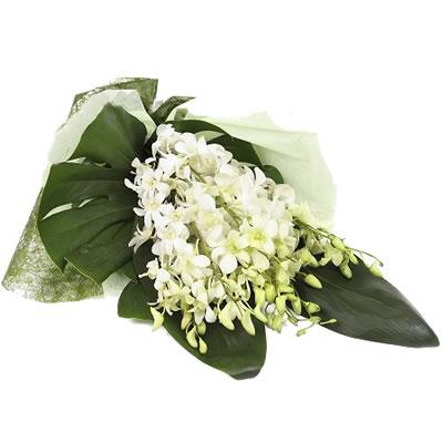Ordina 03 Dendrobium online e invia a domicilio