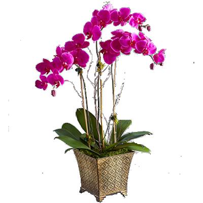 Orchidea a 03 Rami