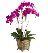 /_public/images/orchidee_mini.jpg