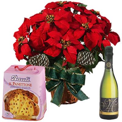 Ordina 00 Stella di Natale con Spumante e Panettone online e invia a domicilio