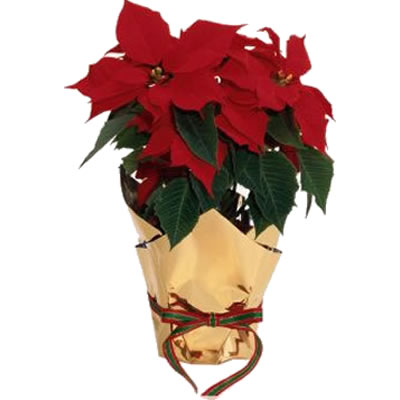Ordina 00 Buon Natale online e invia a domicilio