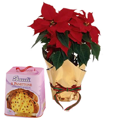 Ordina 03 Buon Natale Con Panettone online e invia a domicilio