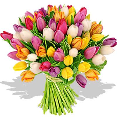 Ordina 00 Tulipani e Fantasia online e invia a domicilio