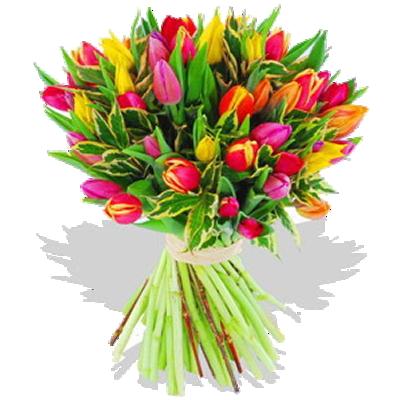 Tulipani in Festa