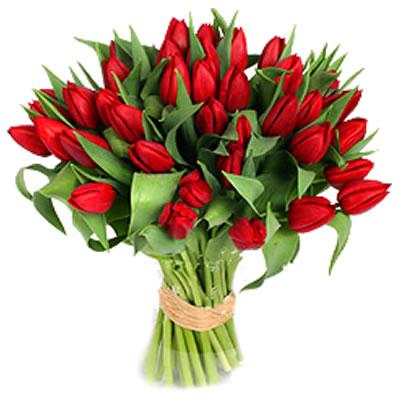Ordina 00 Tulipani Rossi online e invia a domicilio