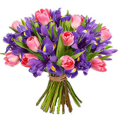 Tulipani Rosa e Iris