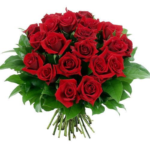 Ordina 05 Rose Rosse online e invia a domicilio