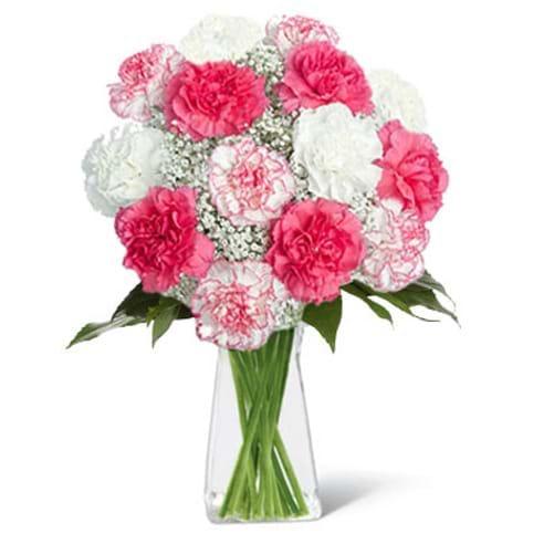 Spedire garofani bianchi e rosa in vaso