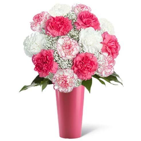 Spedire garofani bianchi e rosa in vaso rosa