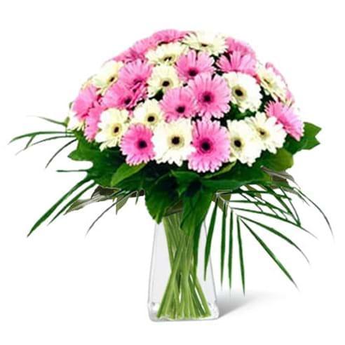 Spedire mini gerbere bianche e rosa in vaso