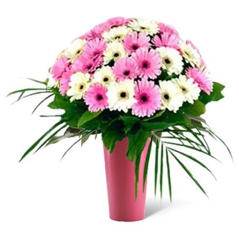 Spedire mini gerbere bianche e rosa in vaso rosa