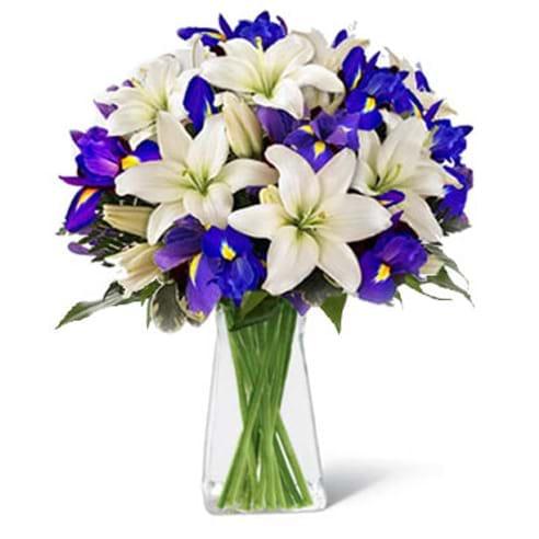 Spedire iris e lilium in vaso