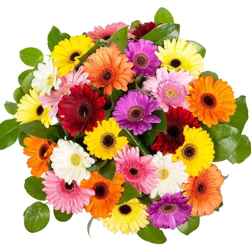 Spedire bouquet gerbere colorate vista alto