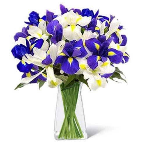 Spedire bouquet iris in vaso