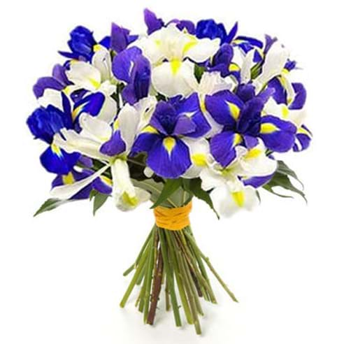 Spedire bouquet iris