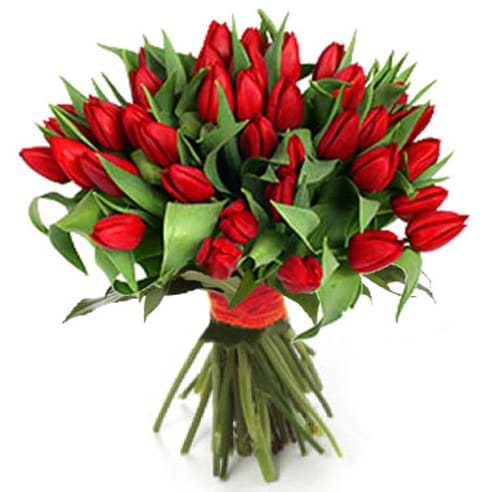 Spedire tulipani_rossi