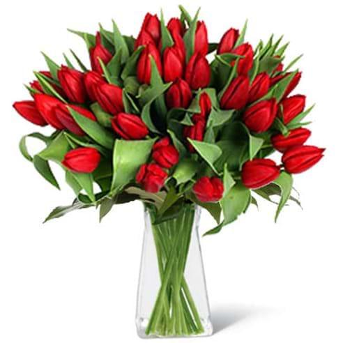 Spedire tulipani rossi in vaso