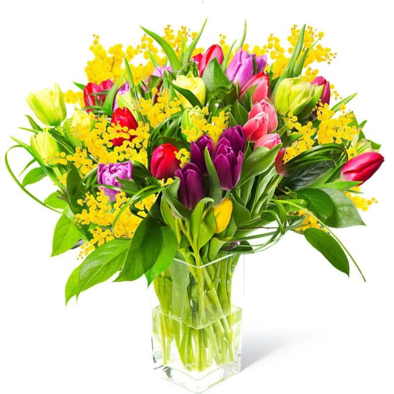 Spedire Tulipani colorati con mimosa in vaso