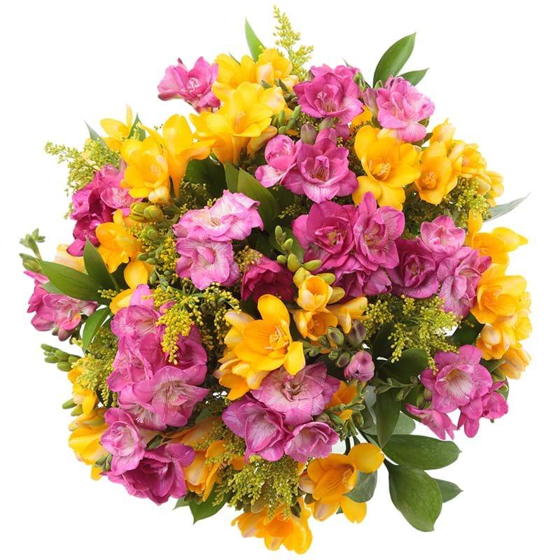 Spedire fresie gialle e rosa vista alto