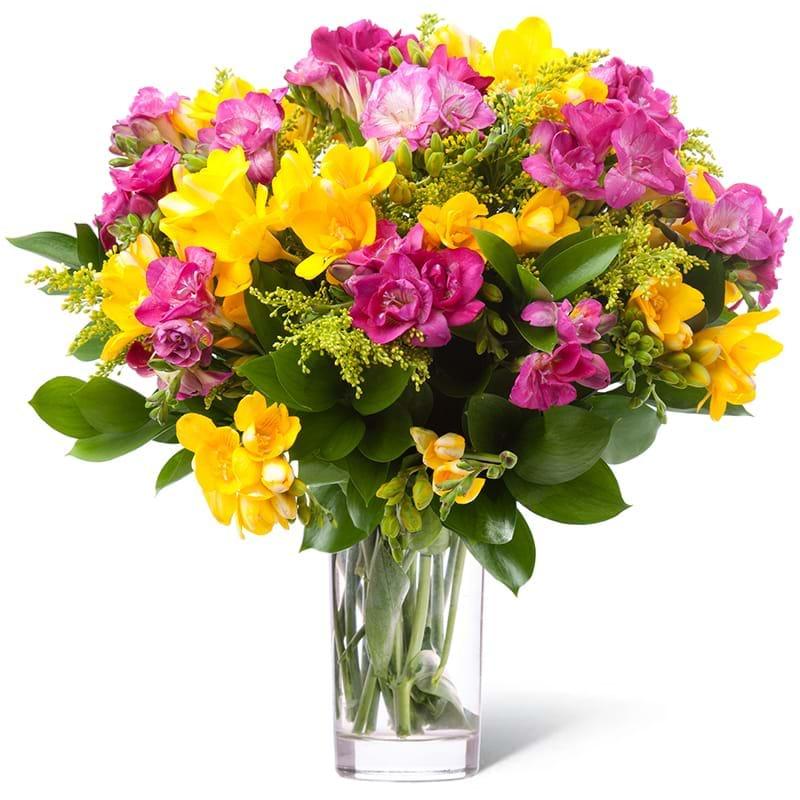 Spedire fresie gialle e rosa in vaso