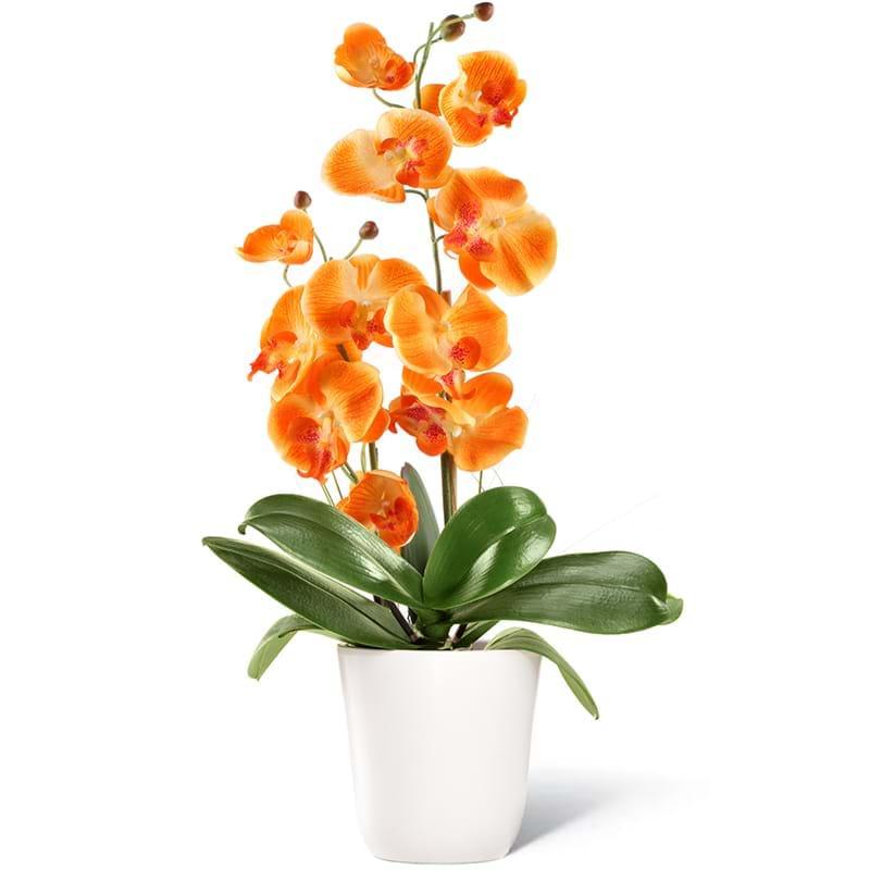 Spedire pianta orchidea arancione
