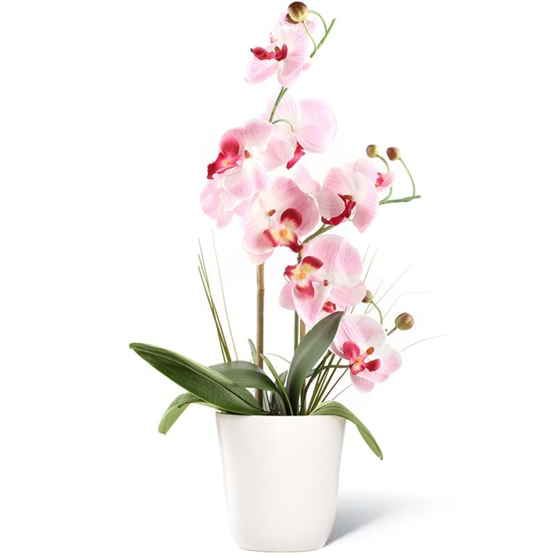 Spedire pianta orchidea un ramo
