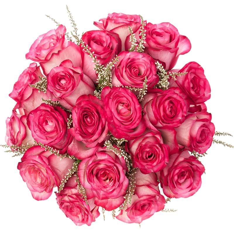 Spedire rose fuxia vista alto