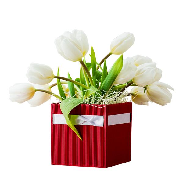 tulipani bianchi in box