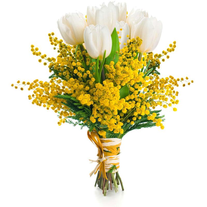 Spedire tulipani bianchi con mimosa