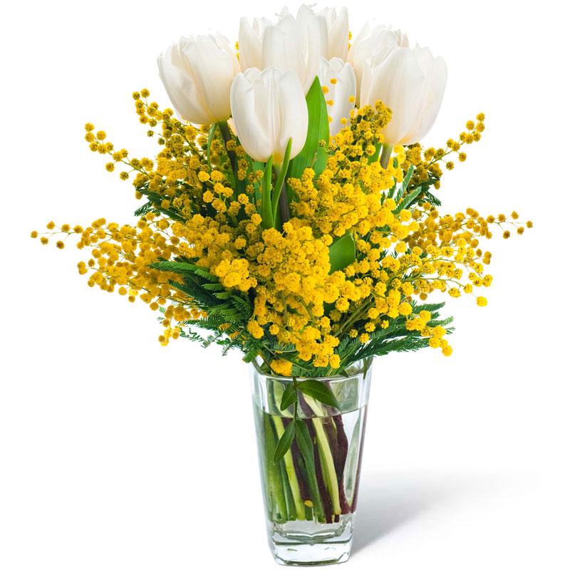 Spedire tulipani biamchi con mimosa in vaso